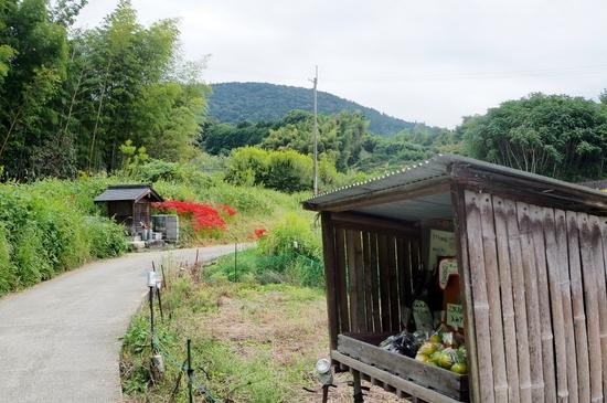 Yamanobea112