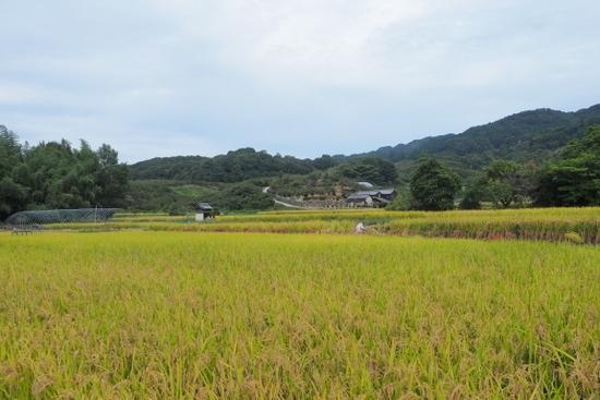 Yamanobea205