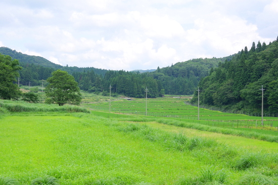 Arihara02