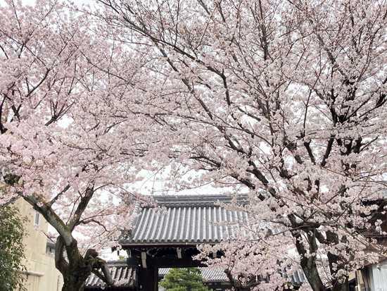 Hontoji