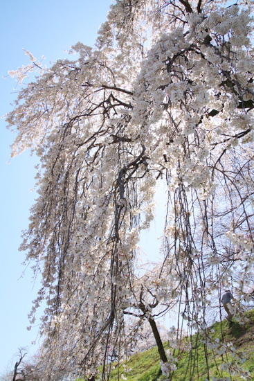 Kisogawat02_20200326201601