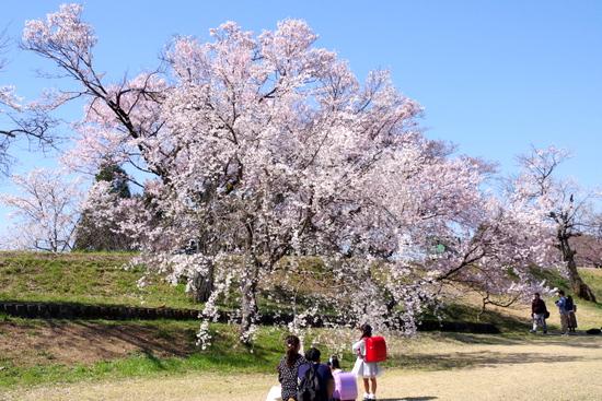 Kisogawat03_20200326201601