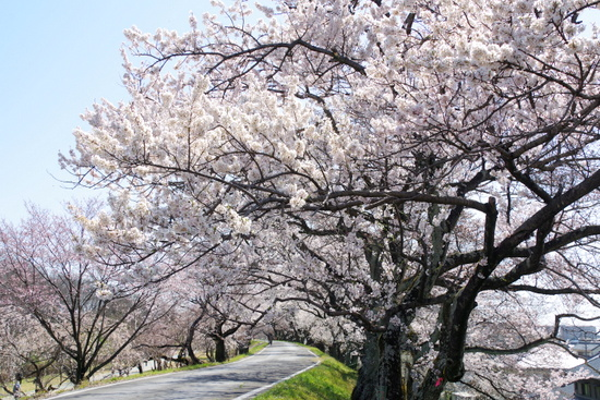 Kisogawat07_20200326201601