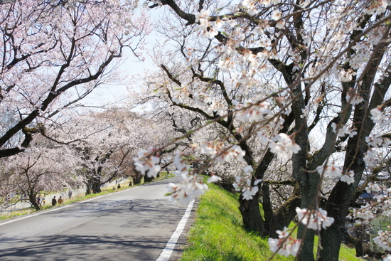 Kisogawat08_20200326201601