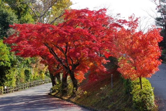 Meijimuraa2006