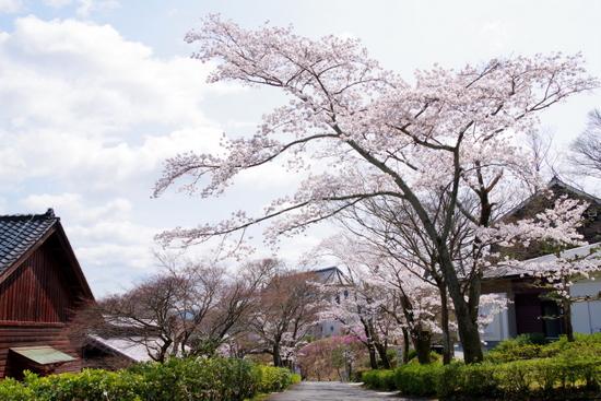 Meijimurao03
