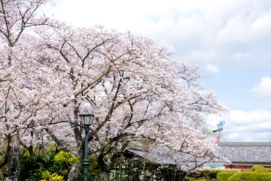 Meijimurao15