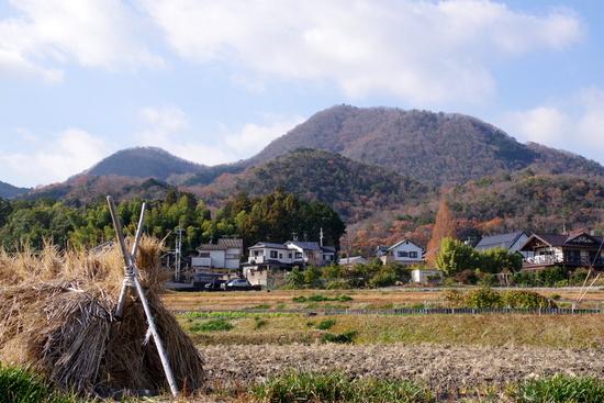 Taimaoku01