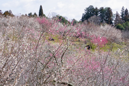 Tsukigasebd15