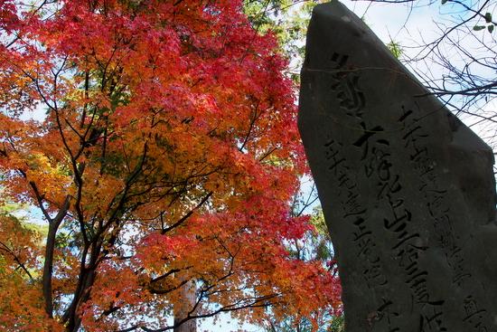 Yoshino20a13