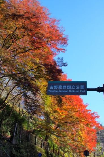 Yoshino20a211